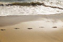 Chemin d'empreintes de pas dans le sable d'une plage Images libres de droits