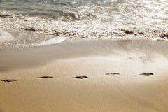 Chemin d'empreintes de pas dans le sable d'une plage Photographie stock