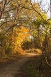 Chemin d'enroulement à travers les bois en retard d'automne à l'heure d'or avec les ombres et le soleil shinning par des feuilles photographie stock libre de droits