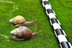 Chemin d'escargot Photo libre de droits