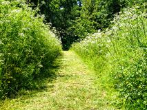 Chemin d'herbe photographie stock