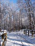 Chemin d'hiver Images stock