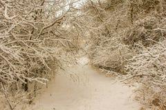 Chemin d'hiver Images libres de droits
