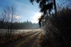 Chemin d'hiver Image stock