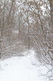 Chemin d'hiver Photos libres de droits
