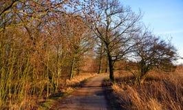 Chemin d'hiver avec le soleil Images libres de droits