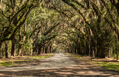 Chemin d'Oaktree de plantation de Wormsloe Photographie stock