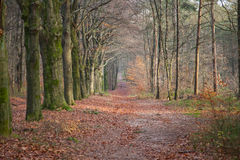 Chemin dans forrest Photographie stock