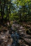Chemin dans Kamikochi Photographie stock libre de droits