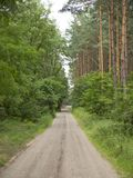 chemin dans la forêt Image stock