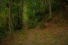 chemin dans la forêt photos stock