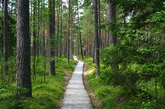 Chemin dans la forêt. photographie stock libre de droits
