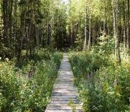 Chemin dans la forêt. Images libres de droits