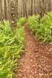 Chemin dans la forêt Image libre de droits