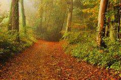 chemin dans la forêt Photographie stock libre de droits