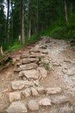 Chemin dans la forêt photographie stock