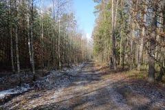 chemin dans la forêt Photo libre de droits