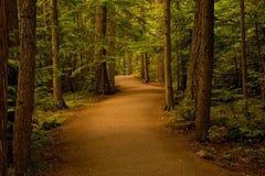 Chemin dans la forêt/bois Photographie stock libre de droits