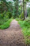 Chemin dans la forêt BRITANNIQUE de pin de région boisée Photographie stock