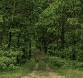 Chemin dans la forêt d'arbres à feuilles caduques photo libre de droits
