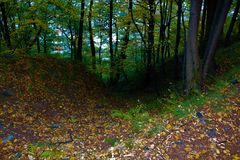 Chemin dans la forêt d'automne photo stock
