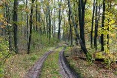 Chemin dans la forêt d'automne Photos stock