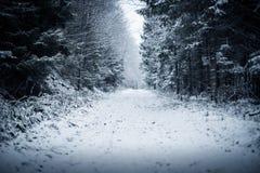 Chemin dans la forêt d'hiver Photos stock