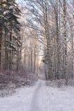 Chemin dans la forêt d'hiver Photographie stock libre de droits