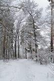 Chemin dans la forêt d'hiver Images libres de droits