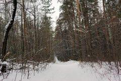 Chemin dans la forêt d'hiver un jour obscurci photo libre de droits