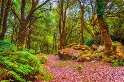 Chemin dans la forêt de fraigada de SA Photographie stock