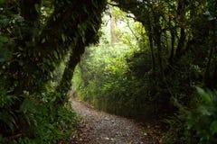 Chemin dans la forêt de nuage de Monteverde, Costa Rica photographie stock libre de droits