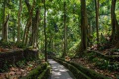 Chemin dans la forêt de singe, Ubud, Bali, Indonésie Image libre de droits