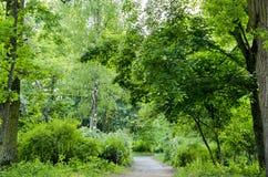 Chemin dans la forêt en été Photos libres de droits