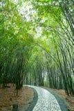 Chemin dans la forêt en bambou Photographie stock libre de droits