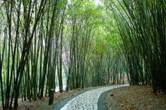 Chemin dans la forêt en bambou Photo libre de droits
