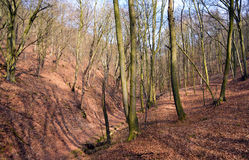 Chemin dans la forêt en vallée Image libre de droits