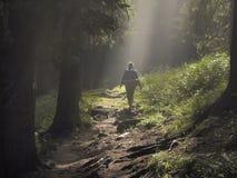 Chemin dans la forêt enchantée image stock