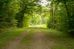 Chemin dans la forêt dans la fin d'été image stock