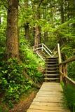 Chemin dans la forêt humide tempérée Photographie stock