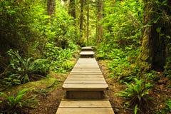 Chemin dans la forêt humide tempérée Image stock