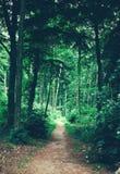 Chemin dans la forêt menant profondément dans les bois photographie stock libre de droits