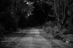 Chemin dans la grande forêt image libre de droits