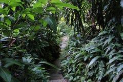 Chemin dans la jungle photo libre de droits