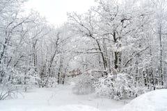 Chemin dans la neige Photo stock