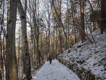 Chemin dans le bois Image stock