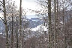 Chemin dans le bois Photo stock
