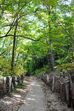 Chemin dans le bois Photos stock