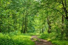 Chemin dans le bois Photographie stock