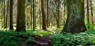 Chemin dans le bois Photos libres de droits